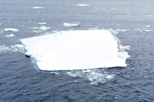 OK, here is our quiz for the day. Can you ding the penguin on this table iceberg? It gives you an idea of the size.