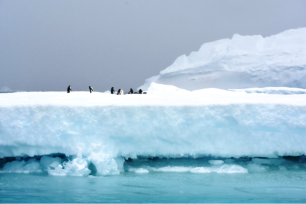 Penguins partying on the 'berg. Look at the thickness of this and then realize that only ten to twenty percent of it is above the water.