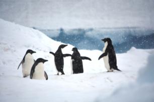 Yeah...It's snowing, it's snowing! Must be summertime in Antarctica!