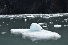 Icebergs that calved off the glacier face are floating everywhere