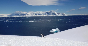 One lonely penguin in this big, big world
