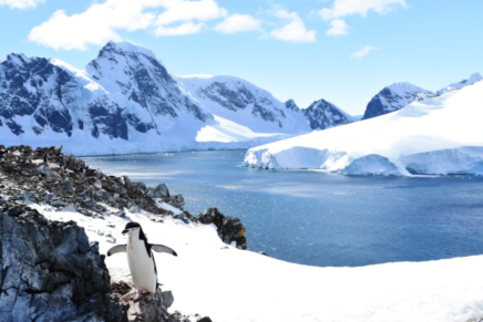 The perfect Antarctica scene, a penguin at his colony with water, ice and mountains in the background