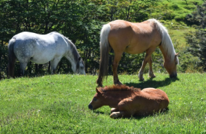 Horses roam wide in town. This group found a nice grassy spot