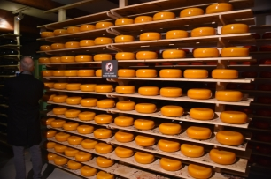 Just a very small sample of the cheeses at the farm