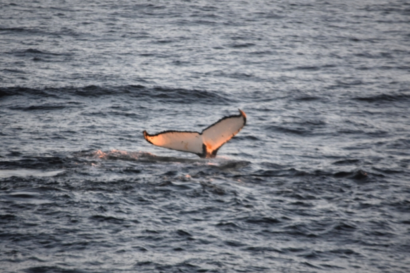 We saw this whale late in the evening